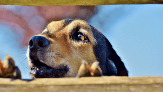 dog barking and how to deal with it